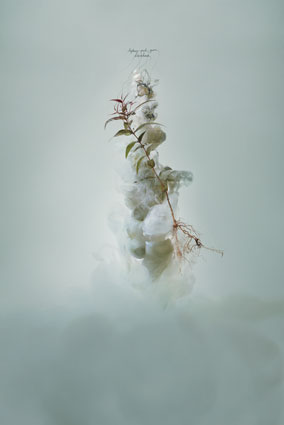 Milk 2 (Sydney red gum), 2008, C-type photograph face-mounted on glass, 100 x 66cm, edition of 5 + 1AP