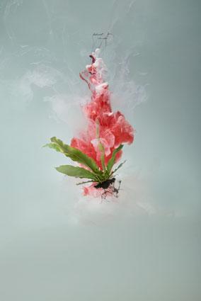 Milk 3 (Bird's nest fern), 2008, C-type photograph face-mounted on glass, 100 x 66cm, edition of 5 + 1AP