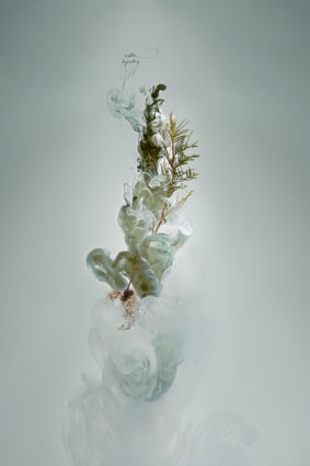 Milk 4 (Wattle), 2008, C-type photograph face-mounted on glass, 100 x 66cm, edition of 5 + 1AP