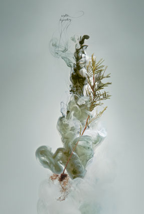 Milk 4 (Wattle) Detail, 2008, C-type photograph face-mounted on glass, 100 x 66cm, edition of 5 + 1AP