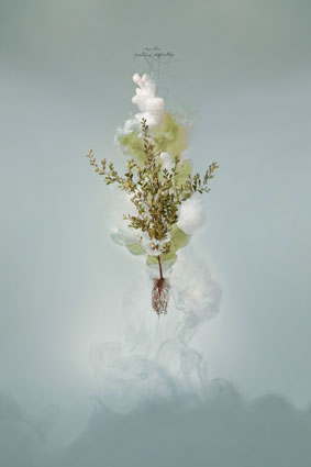 Milk 5 (Tea tree), 2008, C-type photograph face-mounted on glass, 100 x 66cm, edition of 5 + 1AP