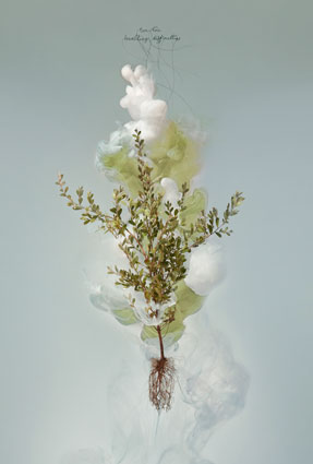 Milk 5 (Tea tree) Detail, 2008, C-type photograph face-mounted on glass, 100 x 66cm, edition of 5 + 1AP