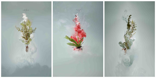 'Milk (tea tree, bird's nest fern, wattle)', 2009, C-type photograph face-mounted on glass, 3 panels, each 160 x 105 cm, edition of 3 +1 AP
