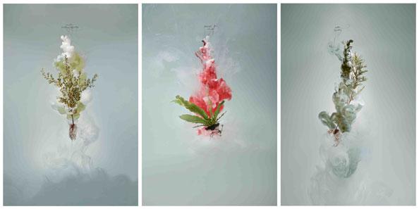 'Milk (tea tree, bird's nest fern, wattle)', 2009, C-type photograph face-mounted on glass, 3 panels, each 160 x 105 cm, edition of 3 +1 AP