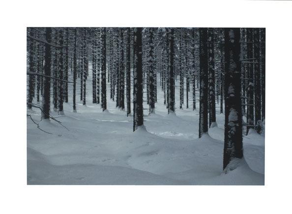 'Forest', 2009, 68 x 93 cm, C-Print, framed