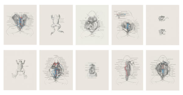 'Slit Series', 2016, 10 Archival pigment prints on acid-free tissue, each 32 x 28cm, edition of 5 + 1AP
