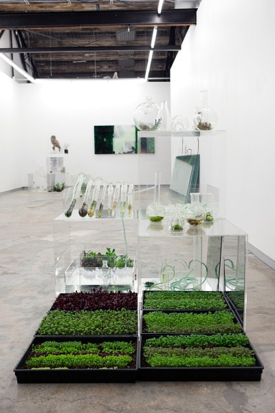 Installation View, Possibilities for a Garden, 2010