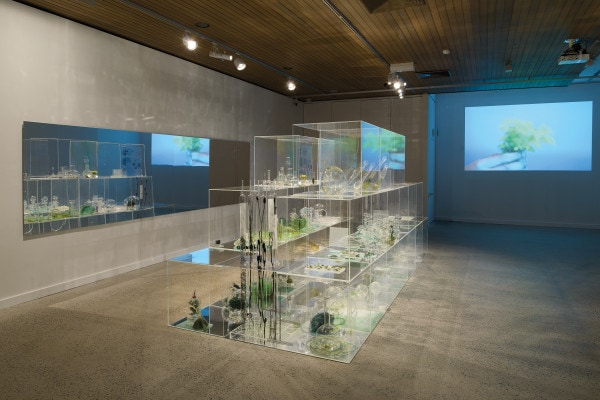 Alchemical Garden of Desire, 2012, site specific installation, acrylic mirror, glass vials, oil glaze, various plant and animal specimens