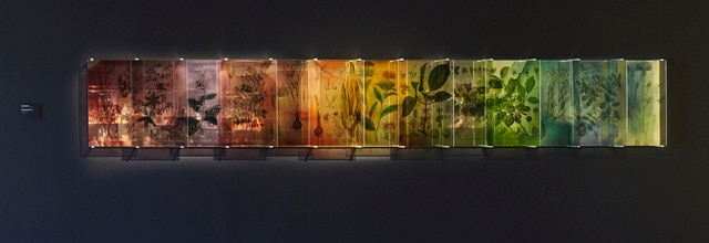 Plants Bleed Lakes,  2017/18<br /> C type silver halide print on clear polyester with dibond<br /> mirror<br /> 13 panels of 40  x 60 cm<br /> (approx. 420 x 60 cm)<br /> Multiple of 3<br />