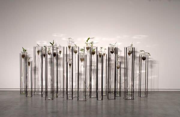 Cellular Gardens (Where Breathing Begins), 2005, stainless steel, mild steel, acrylic, blown glass, rainforest plants, dimensions variable