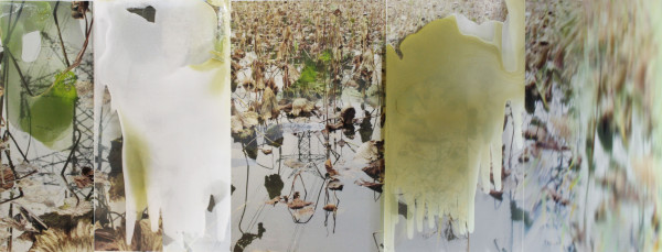 'Oil and Water Lotus Pond, China', 2016, dye sublimation print, oil glaze on acrylic, <br /> 100 x 300 cm