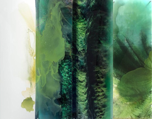 'Avalanche - Conversations with plants in the Tarkine', 2012, duraclear on acrylic, 120 x 180cm