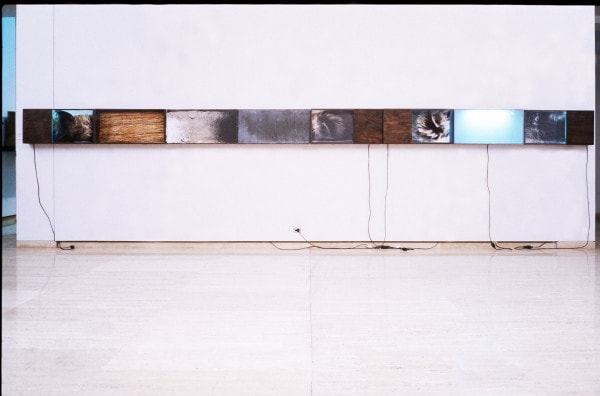 Forensic, 1991, lead, ash, wood, photograph, straw, laboratory glass, Perspex, fluorescent lights and X-rays