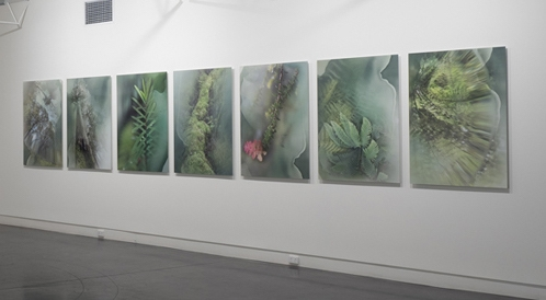 'Arcadian Loss – Our Tarkine', 2017, C type on metallic paper on mounted to Dibond,<br /> 7 panels of 90 x 120 cm each, (approx. 630 x 120 cm in total), edition of 5+ 1 a.p.