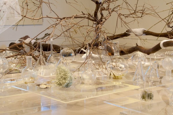 Residue – Blood + Chlorophyll, 2014,<br /> site specific installation, rescued eucalypt tree, mirror, laboratory and hand blown glass, oil glaze, video projection, bones, dried plants