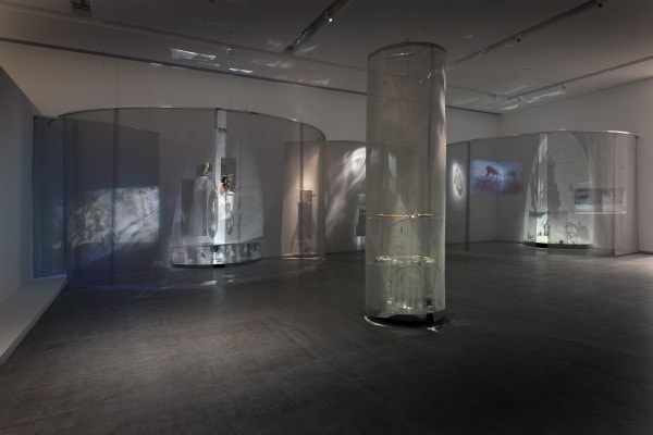 Fugitive, 2013, site specific installation, photograph on acrylic, mirror, laboratory and hand blown glass, oil glaze, video projection, various animal specimens