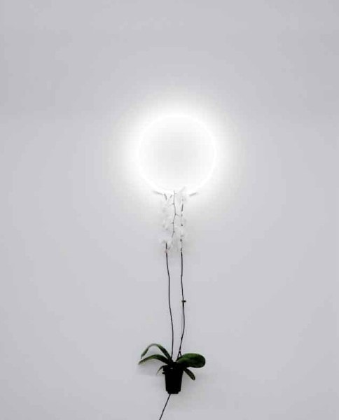 Untitled #3 from the series There's no easy way to say this, 2016, neon, phalaenopsis orchid, edition of 3,