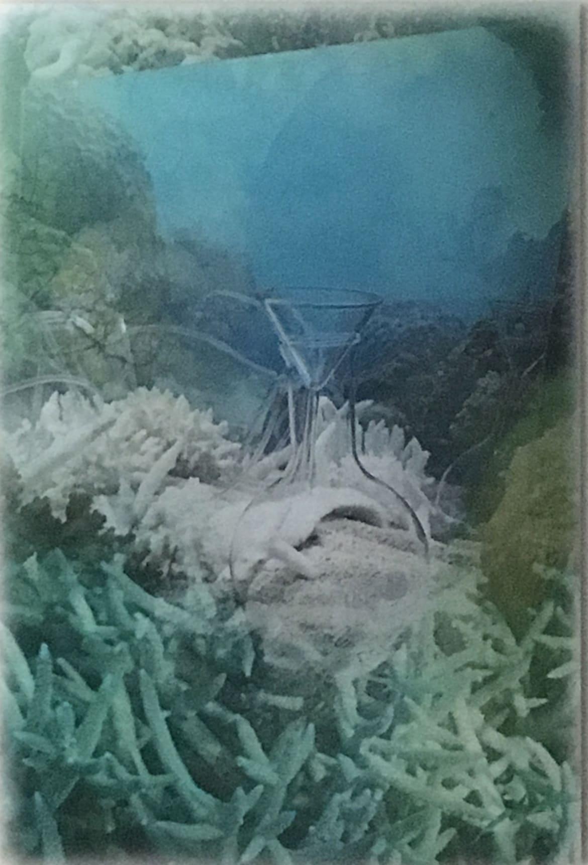 Janet Laurence in Ocean Imaginaries at RMIT Gallery