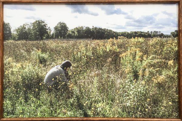 Lottie Consalvo, Desire, Gardening, The Field, Auvers-sur-Oise, France, 2015, Giclee print on cotton rag, 162 x 72 cm, edition of 3 + 2AP