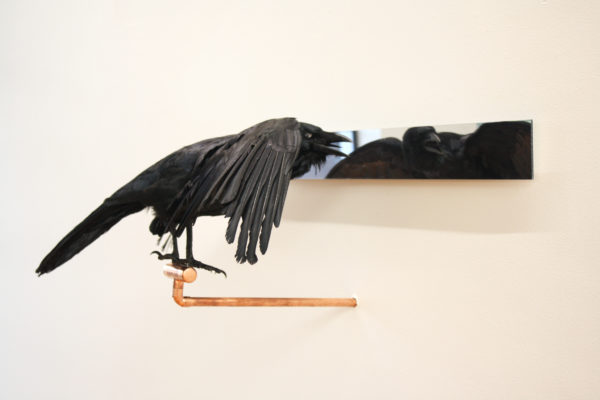 'Affirmations' number 1, 2018, Taxidermy crow, acrylic mirror, copper