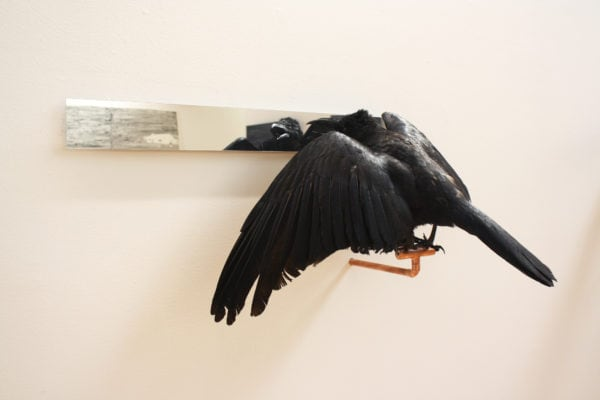 'Affirmations' number 3, 2018, Taxidermy crow, acrylic mirror, copper