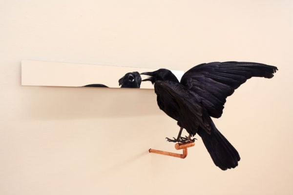 'Affirmations' number 5, 2018, Taxidermy crow, acrylic mirror, copper