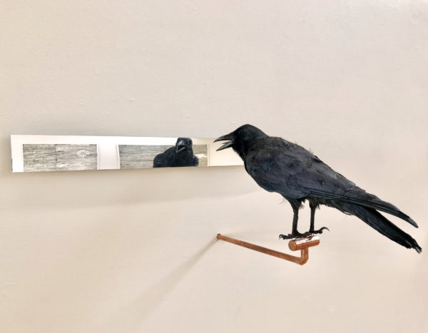 'Affirmations' number 2, 2018, Taxidermy crow, acrylic mirror, copper