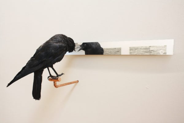 'Affirmations' number 4, 2018, Taxidermy crow, acrylic mirror, copper
