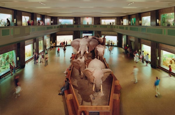 'American  Natural  History  Museum,  New  York',  2006,  Type  C  print,  115  x  182  cm framed,  edition  of  5  +  2  AP