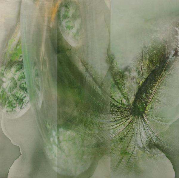 'Tarkine', 2017, dye sublimation print on aluminium, photograph on acrylic, 100 x 120 cm, edition of 3 + 1AP