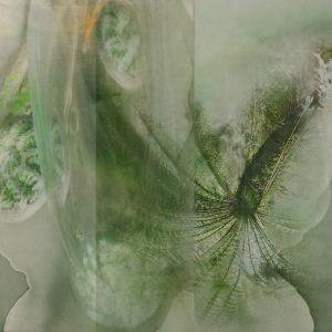 Janet Laurence, 'Tarkine', 2017, dye-sublimation print on aluminium, photograph on acrylic, 100 x 120cm, edition of 3 + 1AP
