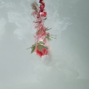 'Milk 1 (Sweet pittosporum)', 2008, C-type photograph face-mounted on glass, 100 x 66 cm, edition of 5 +1AP