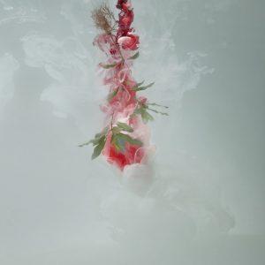 'Milk 1 (Sweet pittosporum)', 2008, C-type photograph face-mounted on glass, 100 x 66 cm, edition of 5 +1AP
