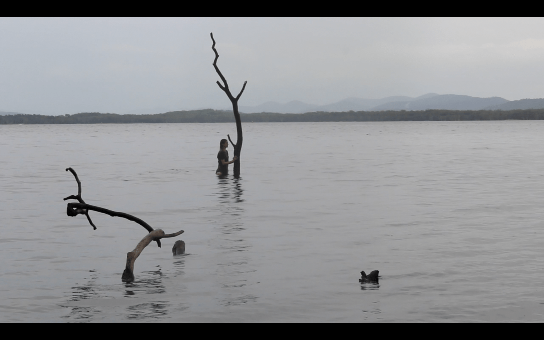 Lottie Consalvo, 'The Last Arborist' (video still), 2020, single channel video, 02:49 mins, edition of 5 +1 AP