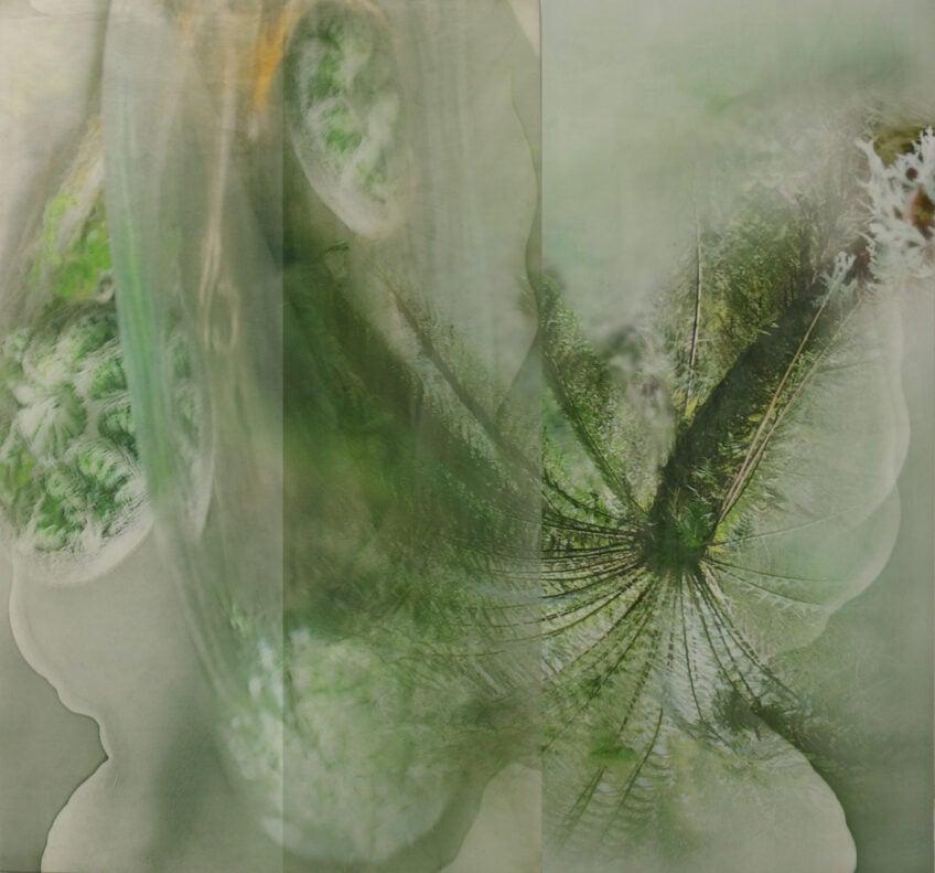 'Tarkine', 2017, dye-sublimation print on aluminium, photograph on acrylic, 100 x 120cm, edition of 3 + 1AP