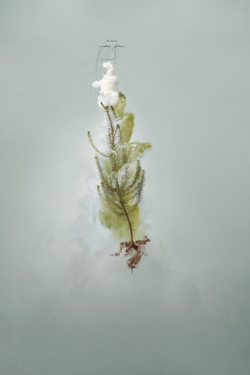 Helen Pynor, 'Milk 8 (Banksia)', 2008, C-type photograph face-mounted on glass, 100 x 66cm, Edition of 5 + 1AP
